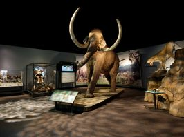 MAMMOTHS - GIANTS OF THE ICE AGE