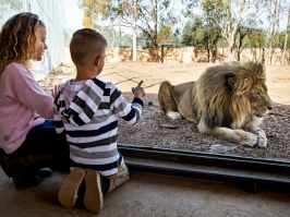 Kids enjoying the Taronga Western Plains Zoo in Dubbo