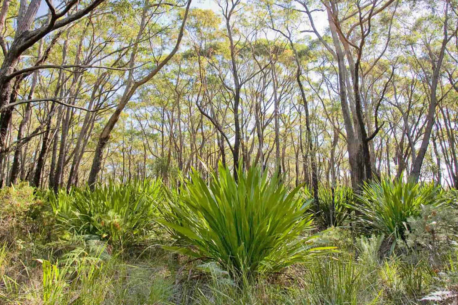 10B cycling trail, Dharawal National Park in Appin, Sydney west