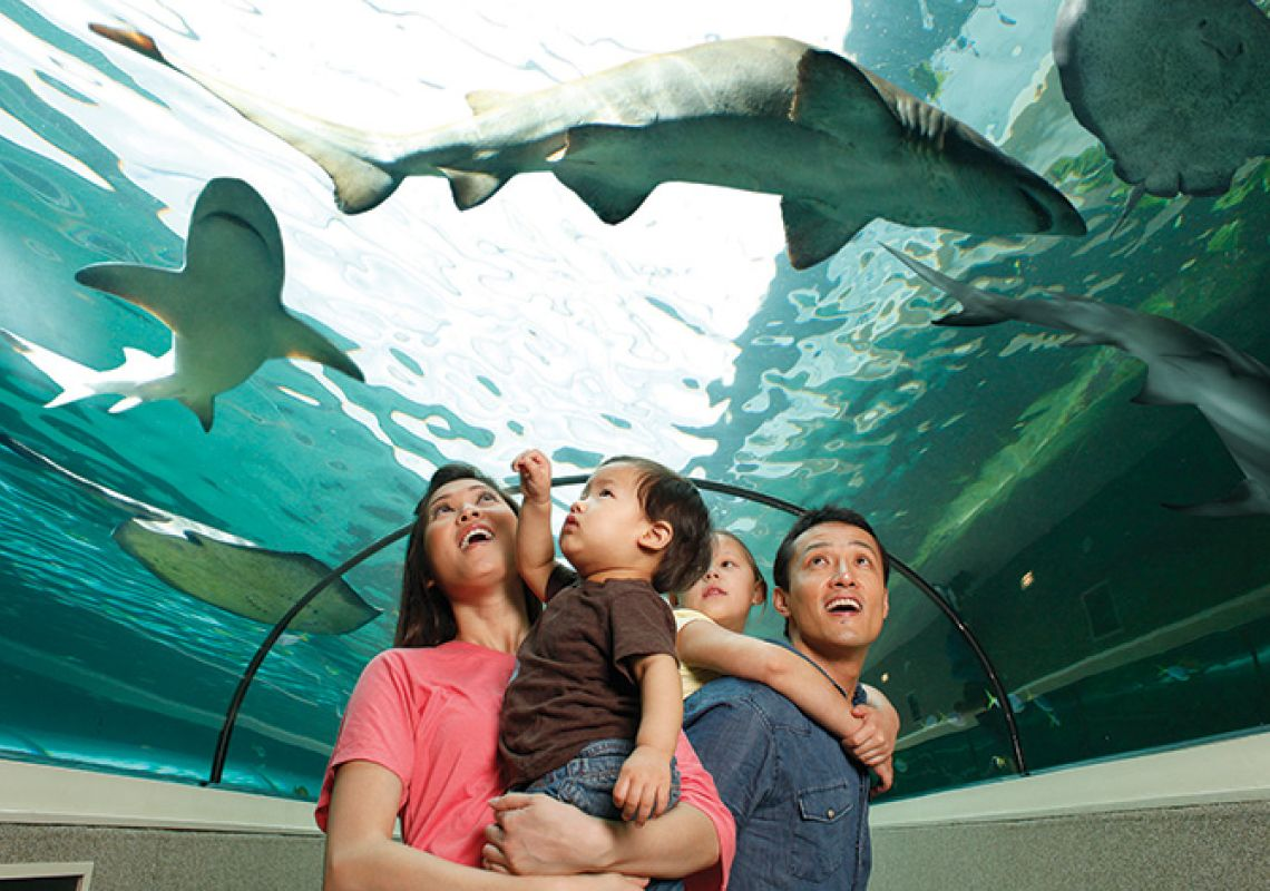 A family watching sharks at the Sea Life Sydney Aquarium, Darling Harbour