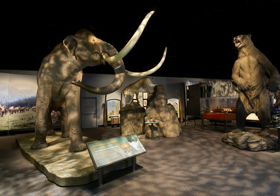 Mammoths at the Giants of the Ice Age Exhibition at the Australian Museum