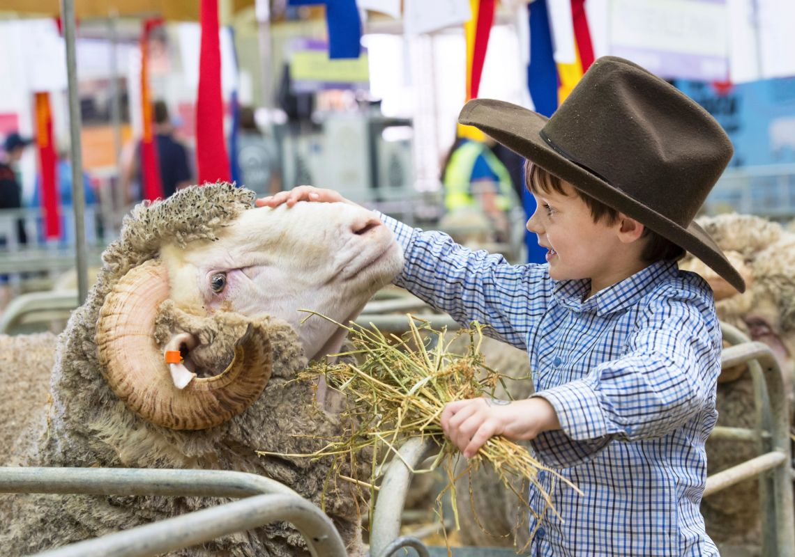 A boy petting a ram at the Sydney Royal Easter Show