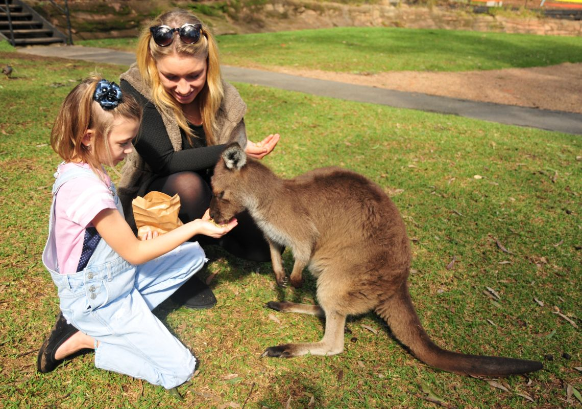 A daughter and her mother feeding kangaroo at Australian Reptile Park