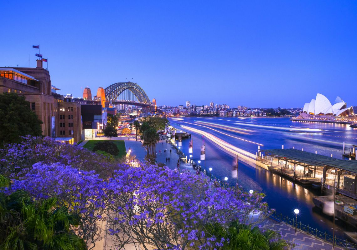 Jacaranda trees blooming in First Fleet Park at The Rocks in Sydney Harbour, Sydney City