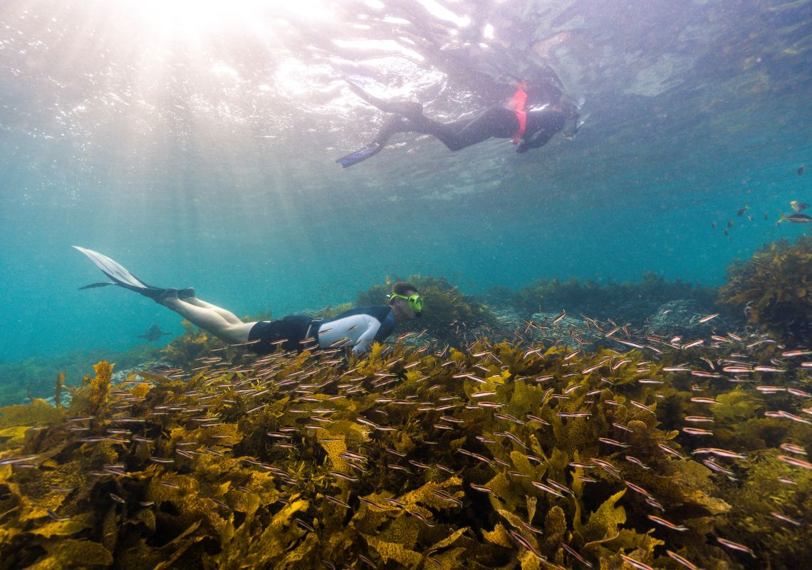 Freedivers exploring the Cabbage Tree Bay Aquatic Reserve, Manly