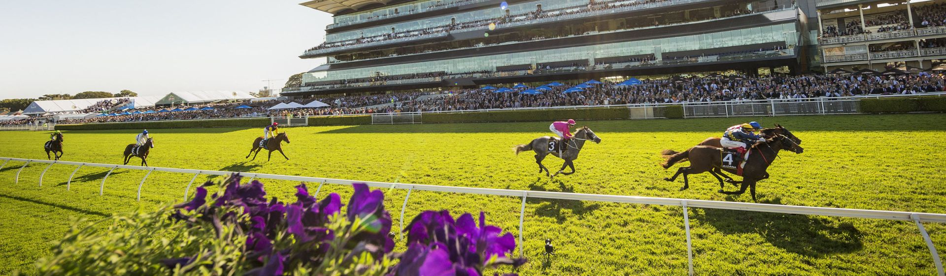 Thoroughbred horses racing at the Championship Races, Royal Randwick