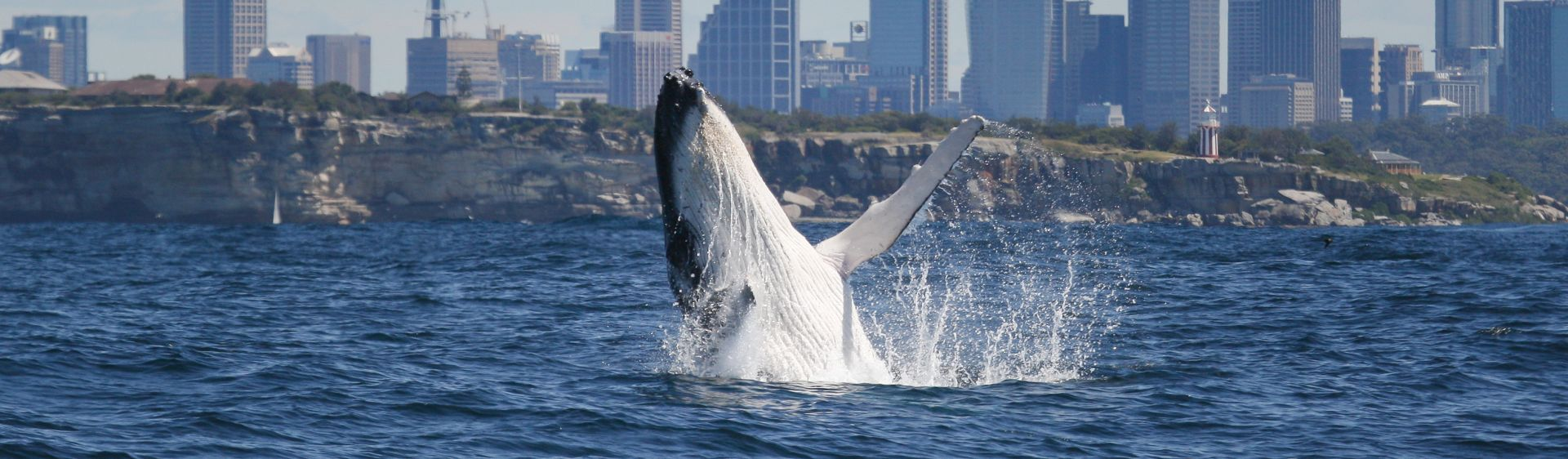 Whale watching, Sydney