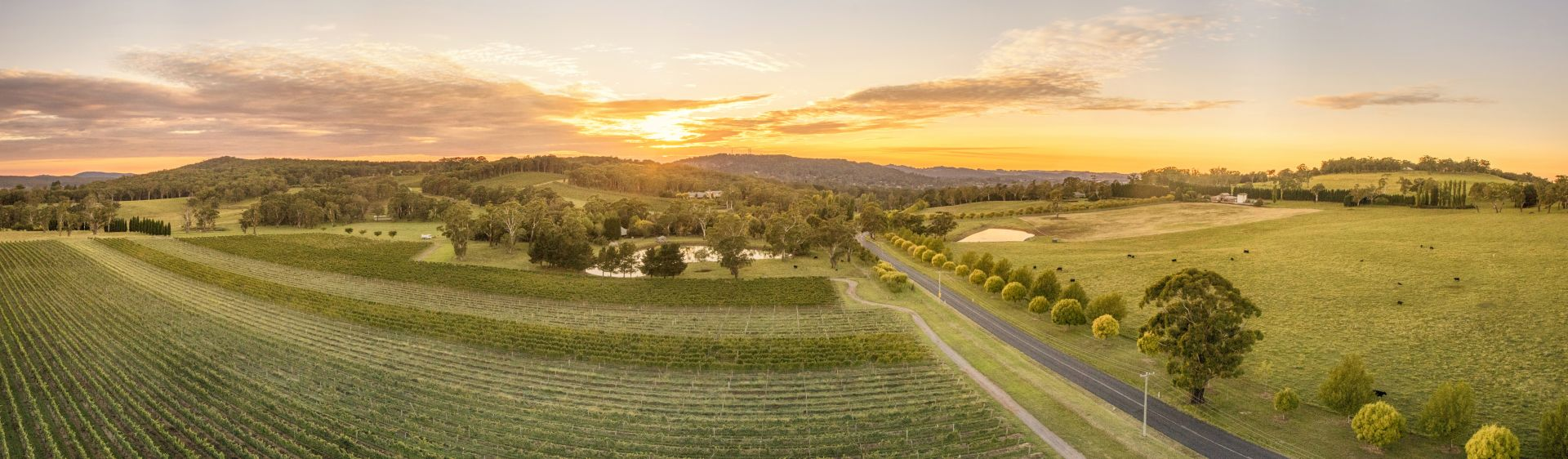Centennial Vineyards, Bowral in the Southern Highlands region