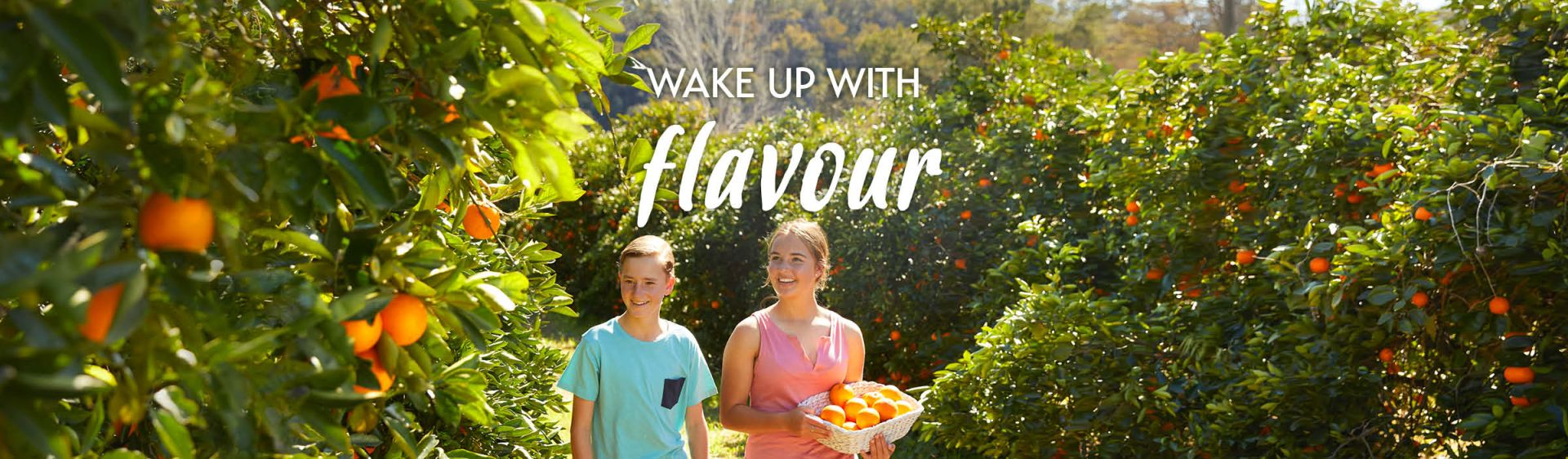 Fruit picking in the Hawkesbury