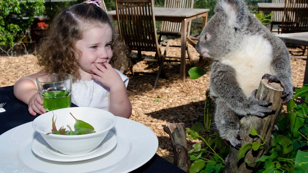 Australian animal adventure at Wild Life Sydney, Darling Harbour