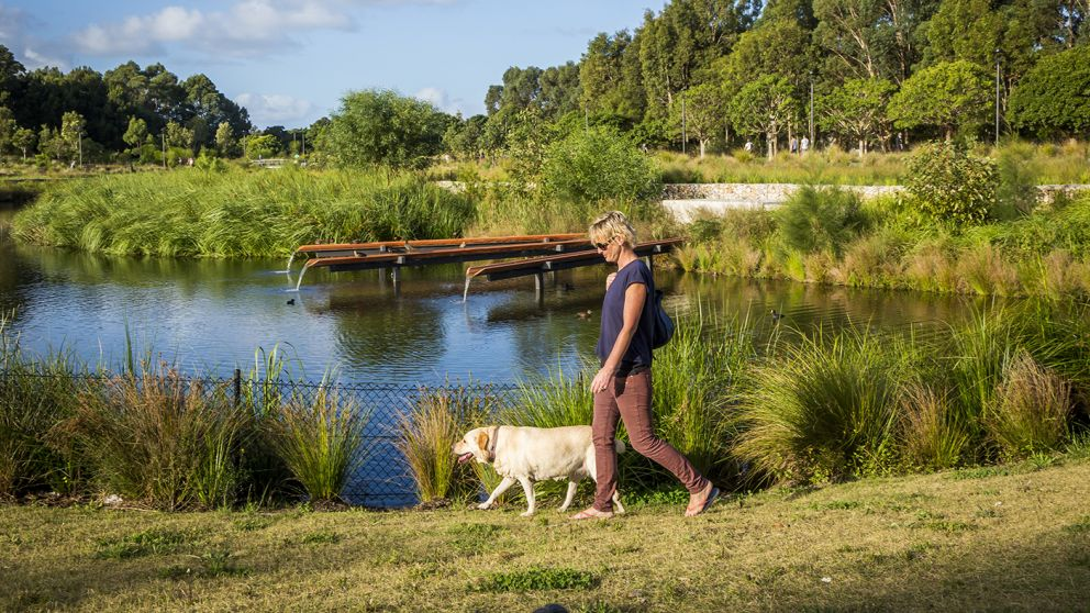 Woman walking her dog by the picturesque wetlands located in the award-winning Sydney Park, St Peters