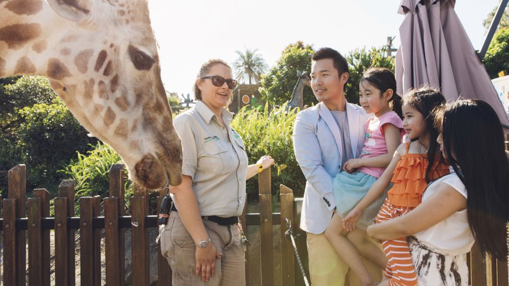 Family enjoying an encounter with a giraffe during the giraffe keeper talk at Taronga Zoo, Sydney North