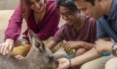 Family feeding a wallaby at Featherdale Wildlife Park, Doonside in Sydney's west