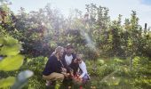 Family apple picking at Shields Orchard - Bilpin