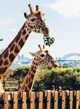 Sydney's Taronga Zoo, Mosman - Sydney North